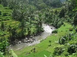 sungaiayung@baliraftingmurah.com